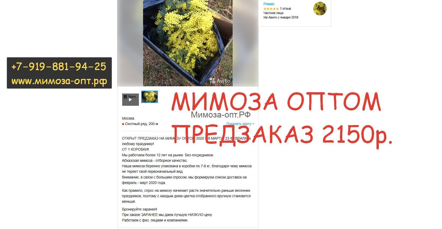 ветка мимозы от 7 рублей -абхазия купить оптом