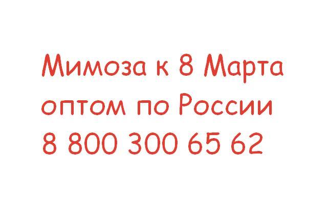 Цены со скидкой на оптовую мимозу по Москве