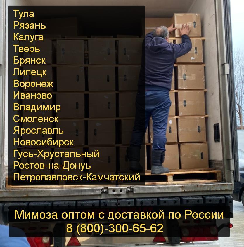 мимоза купить Россия + доставка в коробках оптом