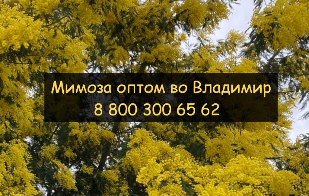 8 800 300 65 62 Владимир мимоза оптом